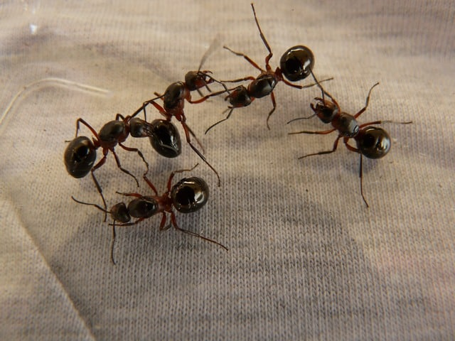 How to Get Ants Out of Your Laptop